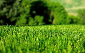 systemy nawadniania Piła nawadnianie ogrodu trawnika trawy z rolki budowa zakładanie