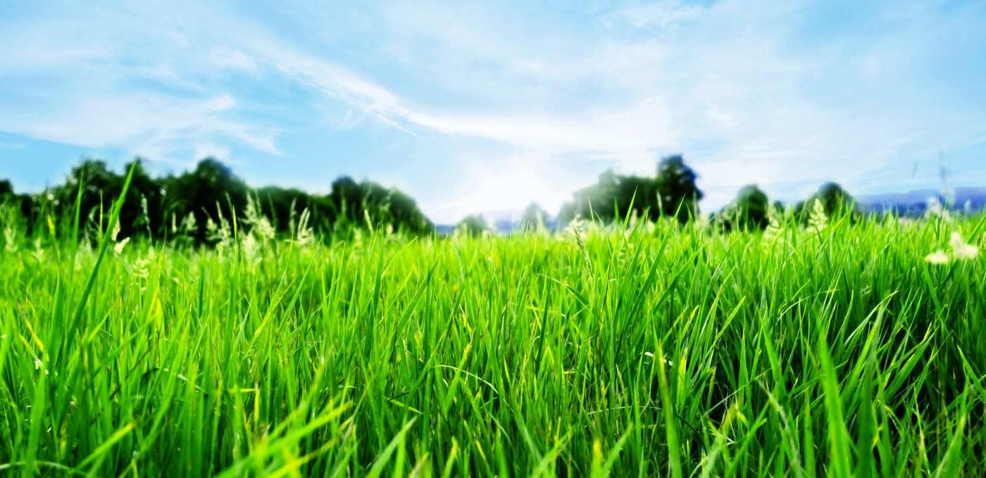 trawniki Piła